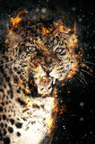 Leopard in fire. Close-up leopard portrait in fire on dark background Royalty Free Stock Photography