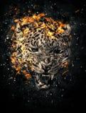Leopard in fire Stock Photo