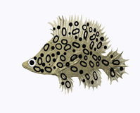 Leopard fish. A little leopard fish on white Stock Image