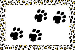 Leopard footprints Stock Photography