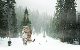 Leopard in forest  Stock Photo