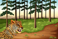 A leopard at the forest Stock Photos