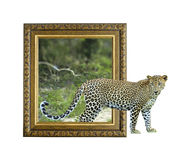 Leopard in frame with 3d effect Royalty Free Stock Photography