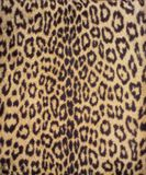 Leopard fur 3 Stock Photos