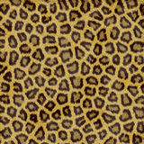 Leopard Fur royalty free stock image