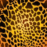 Leopard fur. Background with beautiful leopard fur royalty free illustration