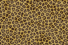 Leopard fur Royalty Free Stock Photos