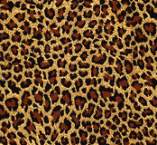 Leopard fur as background Stock Photography