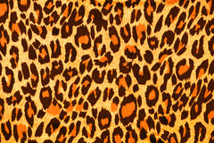 Leopard fur  as background Stock Image