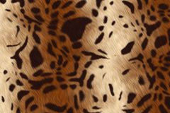 Leopard fur. An background of a leopard fur Royalty Free Stock Photos