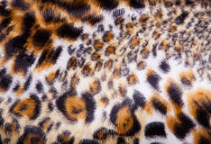 Leopard Fur background Royalty Free Stock Image