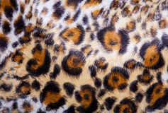 Leopard Fur background Stock Photo