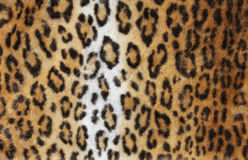 Leopard fur background Royalty Free Stock Photos