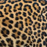 Leopard fur background. Close up leopard fur background Stock Images