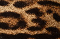 Leopard fur closeup Stock Photo