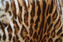 Leopard fur coat Stock Images