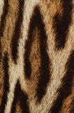 Leopard fur detail Royalty Free Stock Images