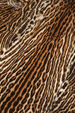 leopard fur details Stock Photography
