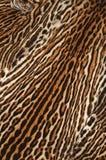 Leopard fur details Stock Photography