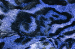 Leopard fur details Royalty Free Stock Photos