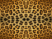 Leopard Fur Pattern. Black and orange leopard fur pattern Royalty Free Stock Images