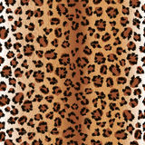 Leopard fur Royalty Free Stock Image
