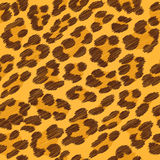 Leopard fur seamless scribble pattern. Stock Image