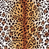 Leopard fur seamless vector print Stock Images