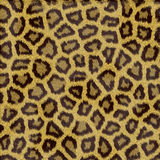Leopard fur texture. In shades of yellow Stock Image