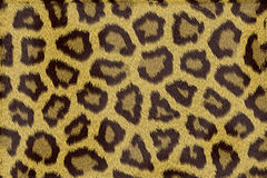 Leopard fur texture. As a background Royalty Free Stock Images