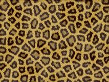 Leopard fur texture Stock Image