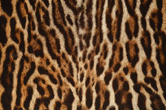 Leopard fur texture Royalty Free Stock Photography
