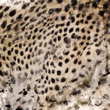 Leopard Fur Watercolor Royalty Free Stock Photography