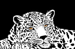 Leopard with gold eyes Stock Image