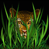 Leopard in the grass illustration Royalty Free Stock Photo