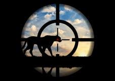 Leopard gunpoint poacher Royalty Free Stock Image