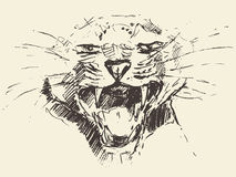 Leopard head attacking pose style drawn sketch Royalty Free Stock Photos