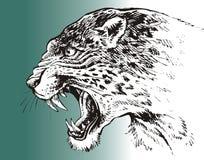 Leopard head isolated Stock Photo