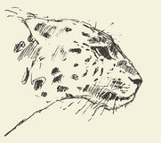 Leopard head style illustration hand drawn sketch Stock Photography