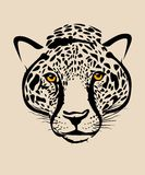 Leopard head Stock Images