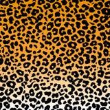 Leopard-Hintergrund Stockbild