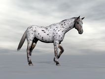 Leopard horse standing - 3D render. Beautiful leopard appy horse standing in grey cloudy background Stock Images