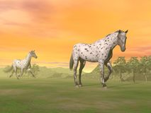 Leopard horses in nature - 3D render. Two beautiful leopard appy horses in the nature by sunset Stock Photo