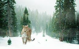 Leopard i snöig skog royaltyfri fotografi