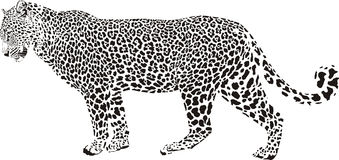 Leopard illustration Stock Images