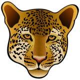 Leopard Illustration Stock Photography