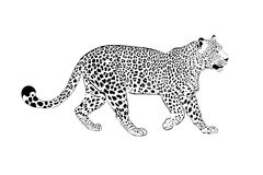 Leopard illustration on a white Royalty Free Stock Images