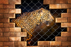 Leopard im Käfig lizenzfreie stockbilder