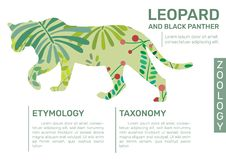 Leopard Infographic royalty free illustration