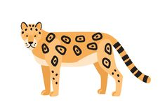 Leopard isolated on white background. Gorgeous wild exotic carnivorous animal. Graceful large wild cat or adorable felid. With spotted coat. Colorful vector stock illustration